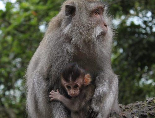 La teoría de la masa crítica: el efecto del centésimo mono